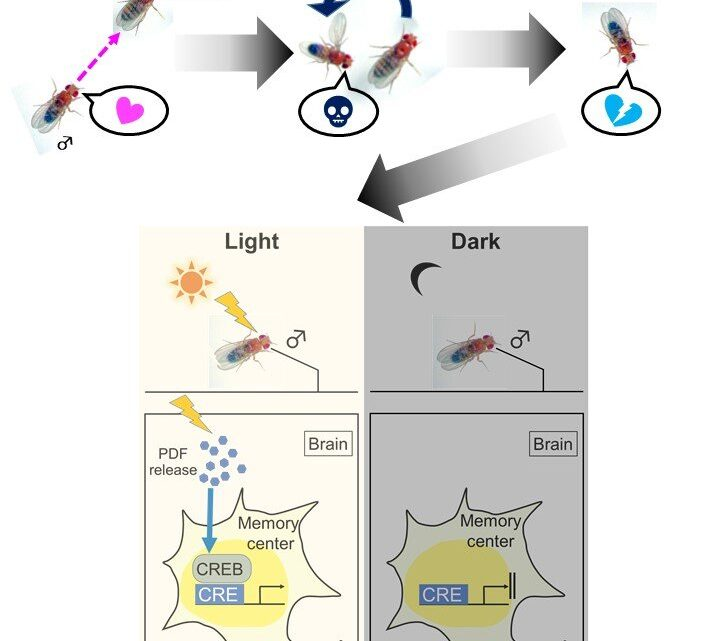 Lack of environmental light may prevent creation of long-term memories