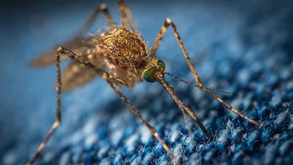Can mosquitoes spread the coronavirus?