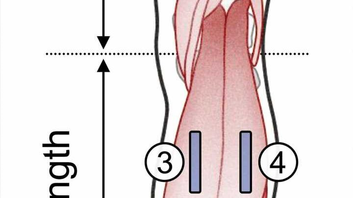 Age not just a number: Causes of joint stiffness differ between older and younger adults