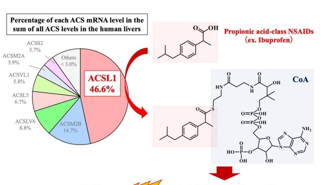 ACSL1 as a main catalyst of CoA conjugation of propionic acid-class NSAIDs in liver
