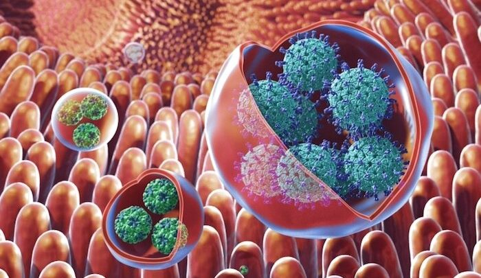 Norovirus clusters are resistant to environmental stresses and UV disinfection, new study finds