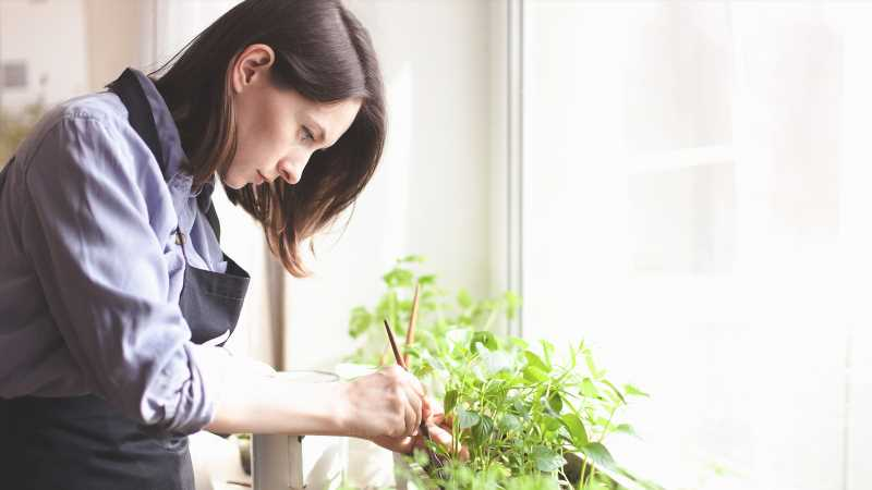 Here's What You Should Know Before Growing Herbs Inside